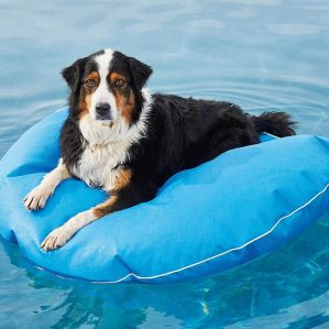 Frongate-Pet-Float-Dog-Pool-Float-and-Lounger-Leviapool