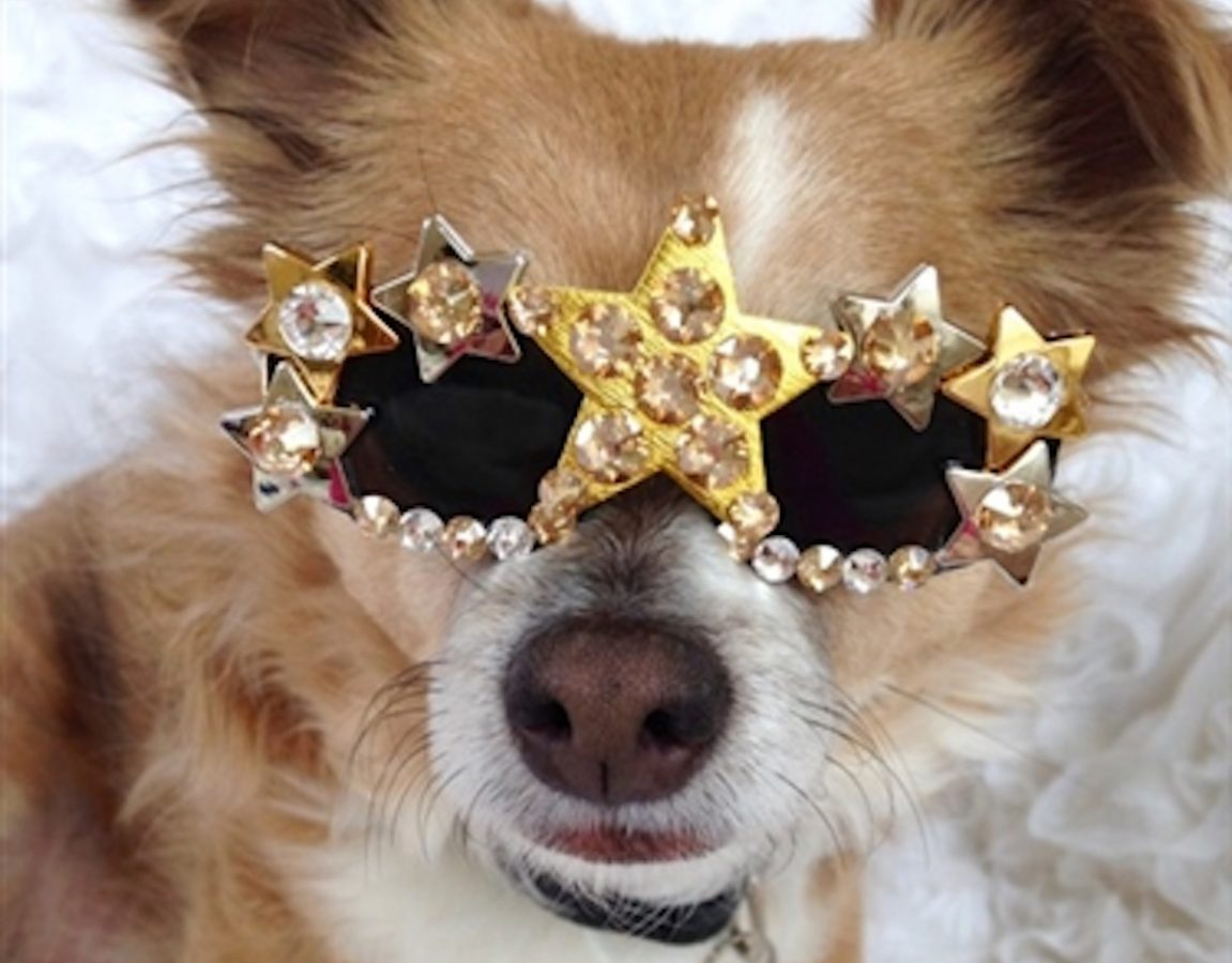 Pet Protection Special Dog Sunglasses